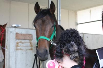 馬と.JPG