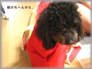 PICT1239.JPG